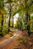 Sunflair on footpath at forest in autumn season, netherlands Stock Images