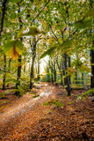 Sunflair on footpath at forest in autumn season, netherlands Royalty Free Stock Photography