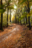 Sunflair on footpath at forest in autumn season, netherlands Stock Photos