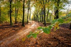 Sunflair na footpath przy lasem w jesień sezonie, holandie Zdjęcia Royalty Free
