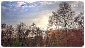 Sunflaire en parc Image libre de droits