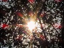 Sunflare在森林地 免版税库存照片