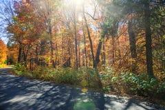 Sunflare в лесе падения стоковые фото
