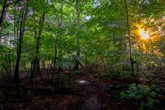 Sunflare Image libre de droits