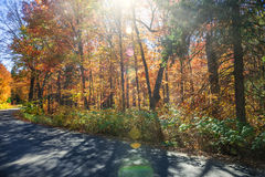 Sunflare in fall forest stock photos