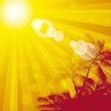 Sunflare orange 1 palms Royalty Free Stock Photo