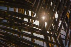 Sunflares door de kokosnotenbladeren dat wordt gezien Stock Foto