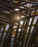 Sunflares door de kokosnotenbladeren dat wordt gezien Royalty-vrije Stock Afbeeldingen