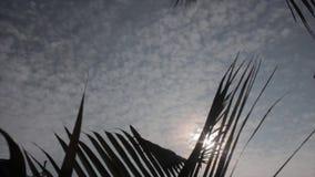Sunflares door de kokosnotenbladeren dat wordt gezien stock video