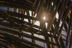 Sunflares som ses till och med kokosnötsidorna Arkivfoto