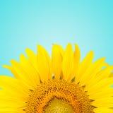 Sunflowe Lizenzfreie Stockbilder
