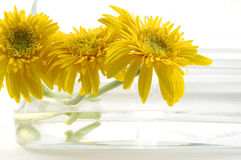Sunflowe Royalty Free Stock Photography