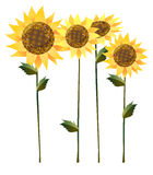 Sunflower. A group of  flowers on the white background Royalty Free Stock Photos