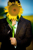 Sunflower. Crazy man is hiding behind sunflower Stock Photo