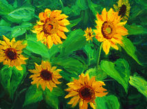 Sunflower. Oil painting about the sunflower Stock Images