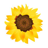 Sunflower. Illustration of a sunflower isolated on white background.EPS file available Royalty Free Stock Image