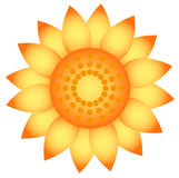 Sunflower. Sunflower element. Isolated on white Royalty Free Stock Photo