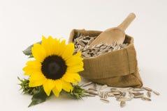 Sunflower. Stock Image