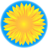 Sunflower. Illustration of a closeup sunflower, Ai 10 Stock Photography