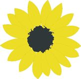 Sunflower. A nice bright yellow sunflower Royalty Free Stock Photography