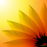 Sunflower. Vector abstract background with sunflower Royalty Free Stock Photos