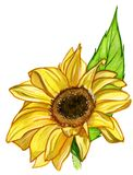 Sunflower Stock Photography