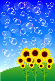 Sunflower. Background illustration of sunflowers and Bubbles Royalty Free Stock Images