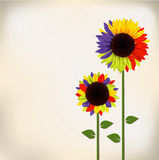 Sunflower. Three colorful sunflowers paper card Royalty Free Stock Image