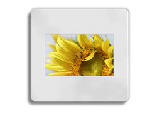 Sunflower 35mm frame Royalty Free Stock Images