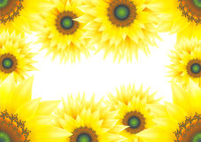 Sunflower. S design with a copy space, beautiful yellow Royalty Free Stock Image