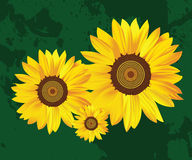 Free Sunflower Stock Photography - 4787282