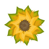 Sunflower. Illustration in yellow and brown Stock Image