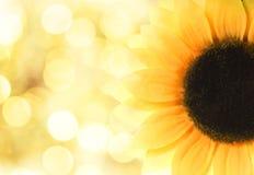 Free Sunflower Stock Photo - 7255270