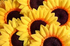 Sunflower Abstract stock photography