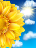 Sunflower against blue sky. EPS 10 Royalty Free Stock Photo