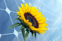 Sunflower And Solar Panels With Sunshine Stock Photos