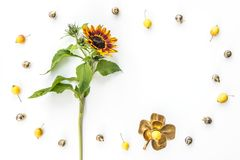 Sunflower and apples frame on white background royalty free stock photography