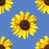 Sunflower as seamless pattern Royalty Free Stock Images