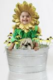 Sunflower baby4. A six months old baby dressed as a sunflower for halloween Stock Images