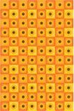 Sunflower backgroun Stock Image