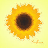 Sunflower background Stock Photo