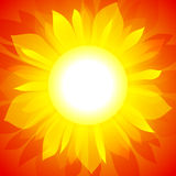 Sunflower  background. Sunflower on red background. EPS10 Royalty Free Stock Images