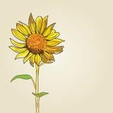 Sunflower background Stock Photography