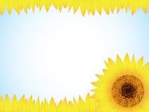 Sunflower background. Vector sun flower brochure design Royalty Free Stock Image