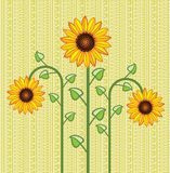 vector sunflower background Royalty Free Stock Image