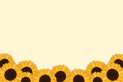 Sunflower background. Group of sunflowers along lower edge and corners of pale yellow background Royalty Free Stock Image