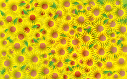 Sunflower Background. Abstract  illustration background of sunflowers Stock Photos