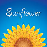 Sunflower. Background with blue sky, vector Stock Images