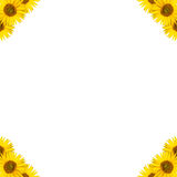 Sunflower border design Royalty Free Stock Photos