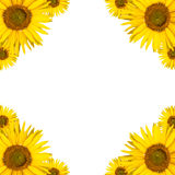 Sunflower background copyspace Royalty Free Stock Photos